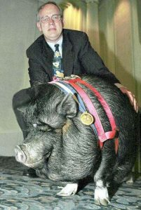 Lulu, the hero pig